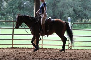 Working Light Breed Stock by OceanLore