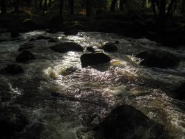 River in the Forest by 666squirrelOFdeath