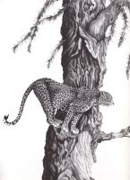 African Leopard -pencil by LisaCrowBurke