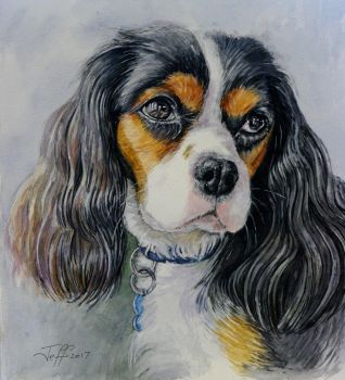 Bob...our King Charles Cavalier by jeffsmith1955