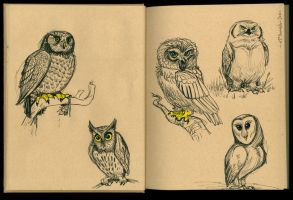 Owl Sketches 04 by Cre8tivemarks