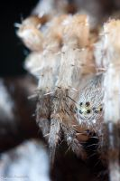 Spider eyes by Dunadan-from-Bag-End