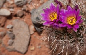 Catus Bloom by MtnGirl