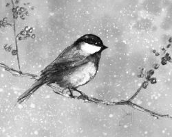 Chickadee by Devin-Francisco