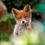 Scamp 06 by Alannah-Hawker