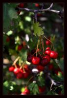Fake Cherries by FilipaGrilo