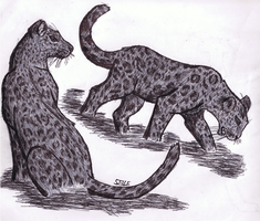 Leopards by SeLLeRockZ
