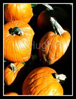 Pumpkins by lehPhotography