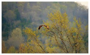 An Eagle In Flight by TheMan268