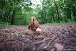 The nut and squirrel by Lonely-black-cat