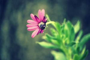 Where flowers bloom so does hope by ahley