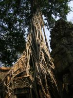 Angkor wat by Dom9098