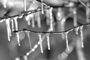 icicle 6 bw by Djohns