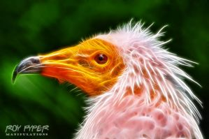 Egyptian Vulture: Fractalius Re-Edit by nerdboy69