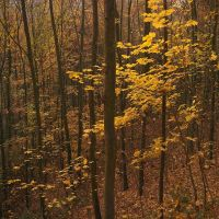 Golden forest 2 by yuushi01