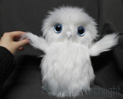 Snowy Owlet by PastYourPorchlight