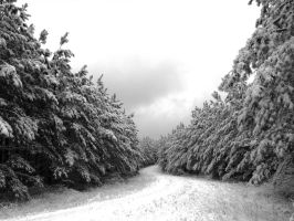 Winter pines by flowersteph