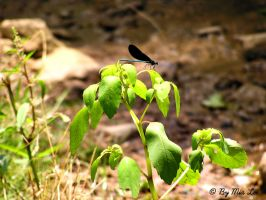 Dragonfly 03 by MiaLeePhotography