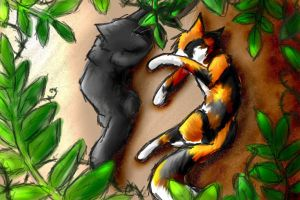 Hollyleaf and Sol by JediMasterQuill