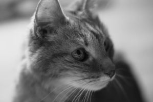 The Cat by John-Furie-Zacharias