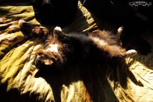 cat in the sun by Wintertale-eu