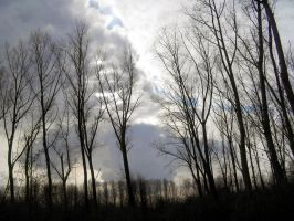 Trees 3 - 11-02-06 by Sweetpepper-stock