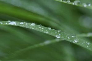 Water Drops 004 by MonsterBrand-stock