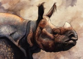 Rhino by Ruth-Tay