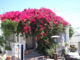 The House of Bougainvillea by animedugan