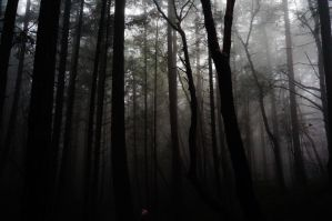 The Woods by aperture-studios