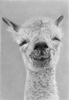 Pencil portrait of a baby alpaca by LateStarter63