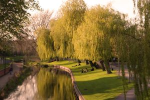 Weeping Willow by Cogs90