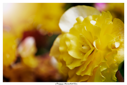 Yellow. by xPerigryn