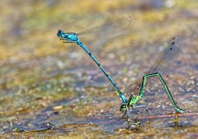 At last we meet  :) by Robert-Eede