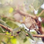 Autumn sparrow by Justysiak