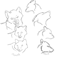 Wolf head practise by Rubylockheartwolf