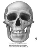Speed paint of a human skull front view by Learningasidraw