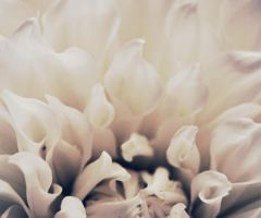 Dalia II by fluorescent2892