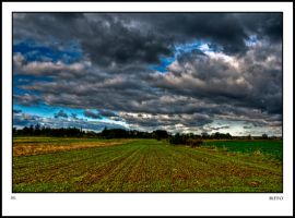 Blue Sky and Green Grass by Riffo