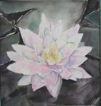 water lily by Lamorien