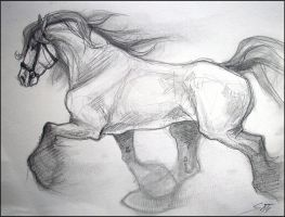 Sketchbook: Trotting Horse by TheUrbanFox