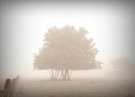 Trees in the mist by April-Mo