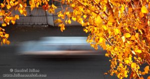 Autumn Leaves by Revolt666