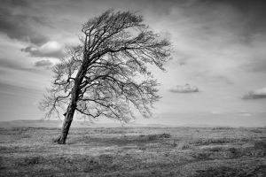 Tree-Study-001-w by noumenalarts