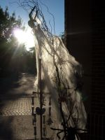 Skeleton, path, spider, sun by sketchydreamerstock