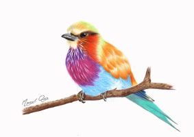 Lilac breasted roller by scubagirlph