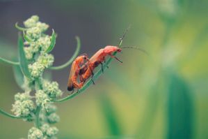 Insects. by basia944
