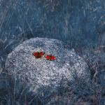 two by Megson