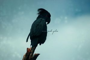Perched and Pensive by themissadventures