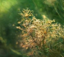 Only grass by Olga17